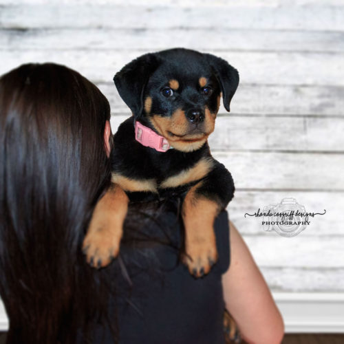Pet Photography by Rhonda Cosgriff Designs