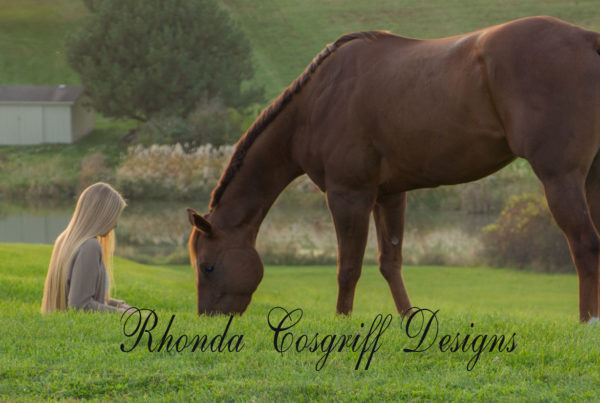 Equine photography by Rhonda Cosgriff Designs
